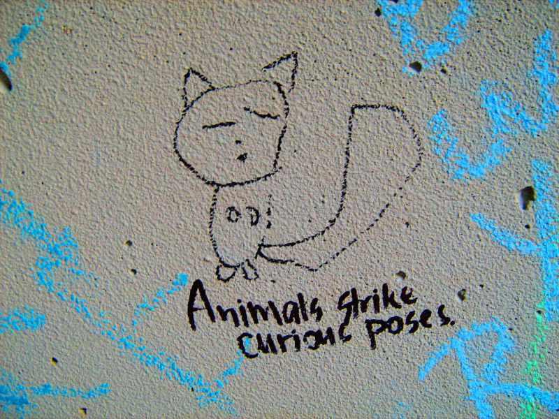 gli animali si mettono in pose curiose